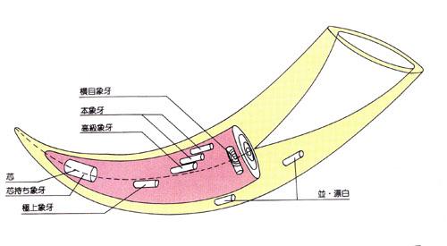 象牙の印材